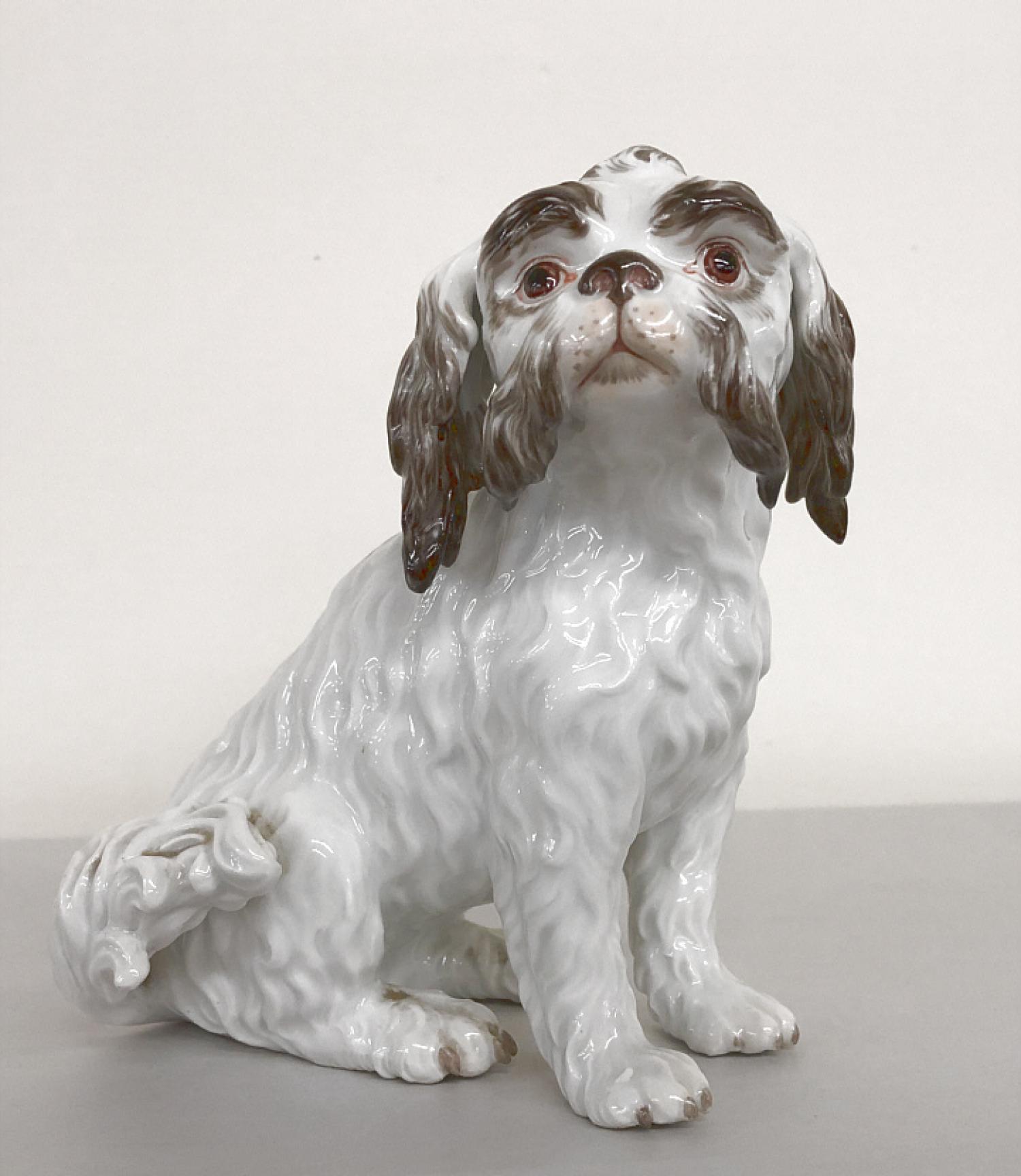 19th c Meissen porcelain Bolognese spaniel