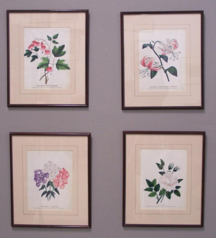 Set of 4 19 thc colored D M Dewey  botannical prints
