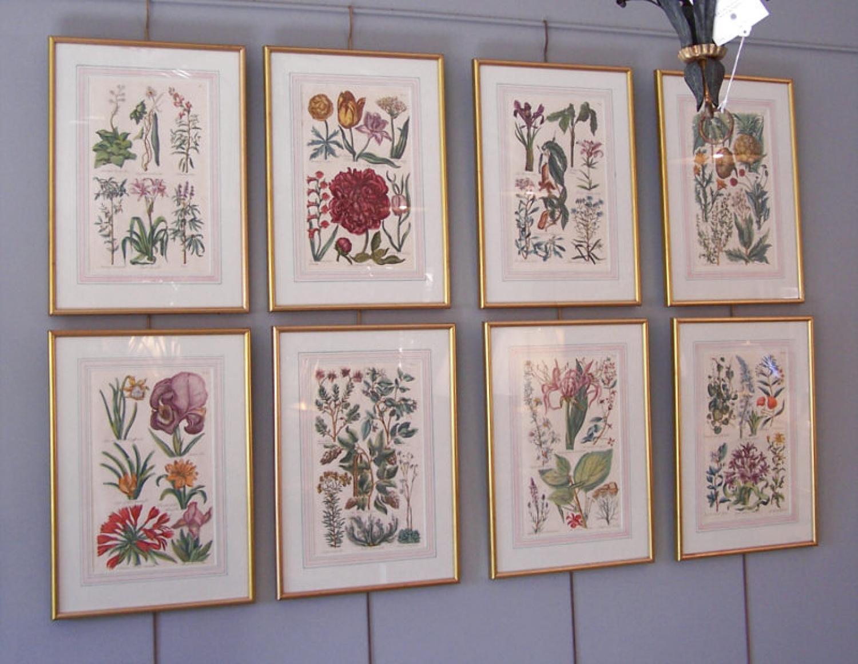 Set of eight John Hall hand colored botanical prints 1757