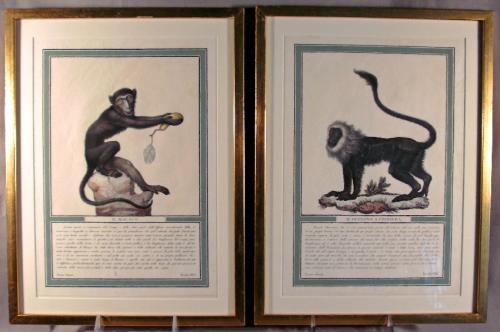 French monkey engravings Jacques de Seve c1749