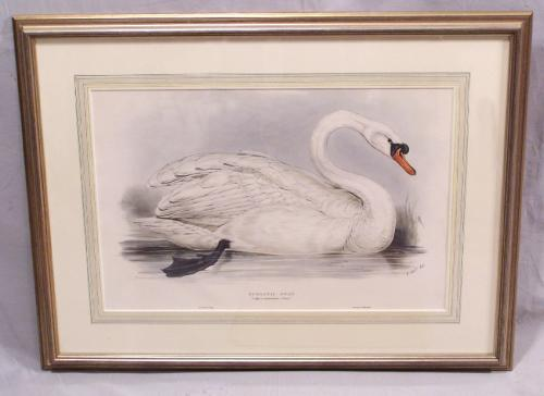 Edward Lear Domestic Swan Lithograph
