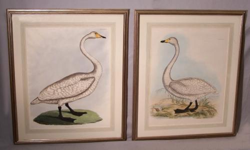 Pair of P J. Selby Swan Copper Engravings