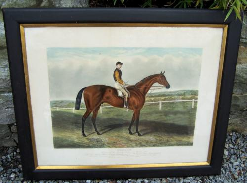 Common Winner of the Derby Stakes at Epson 1881