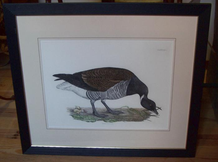Brendt Bernicle copper plate goose etching XLV by John Selby