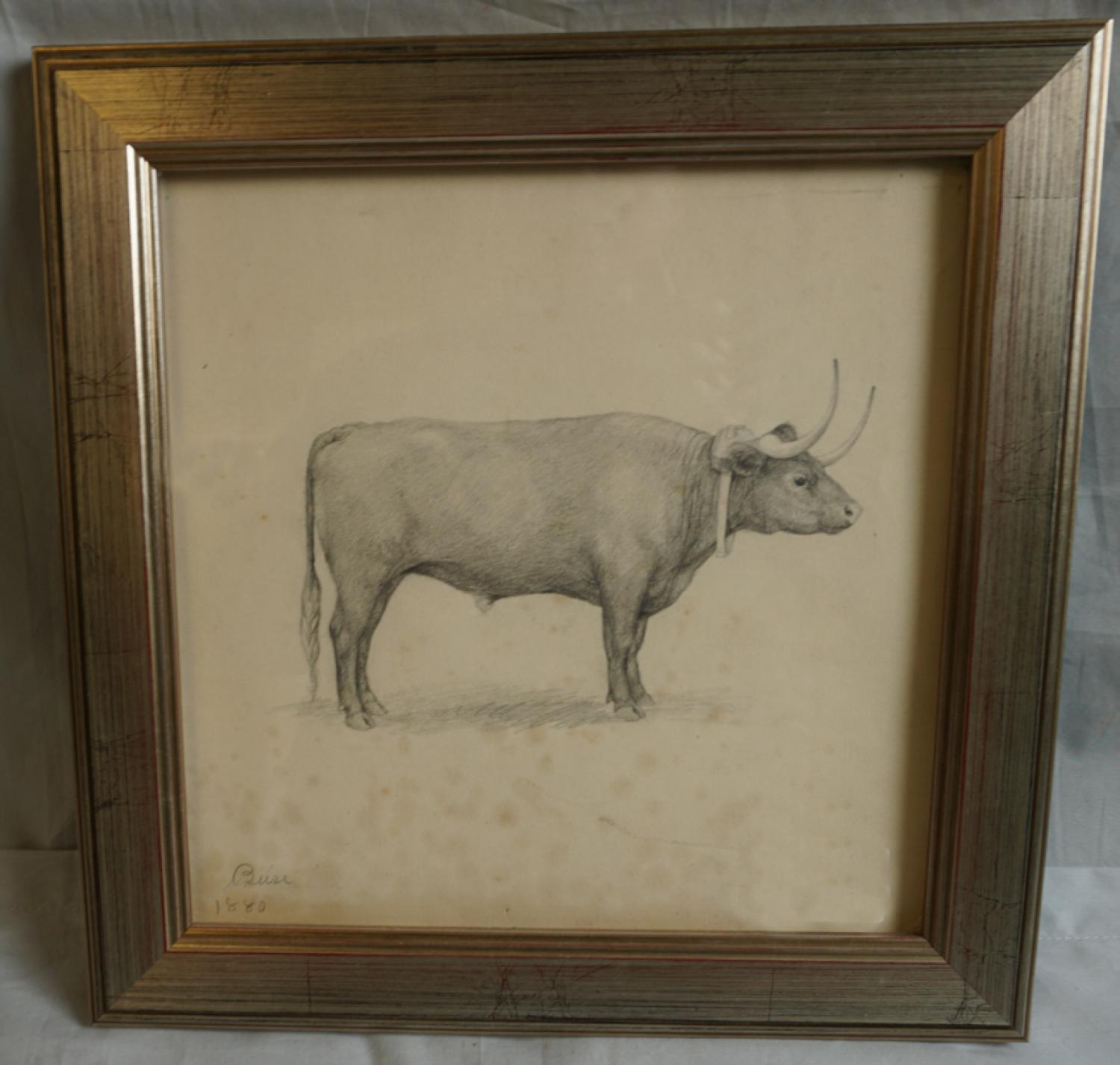 Fannie Burr pencil drawing of a bull on paper 1880